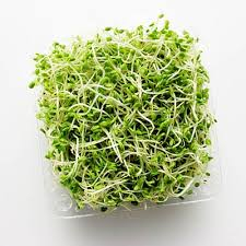 Organic Alfalfa Sprouts (local)